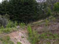 Deers_03